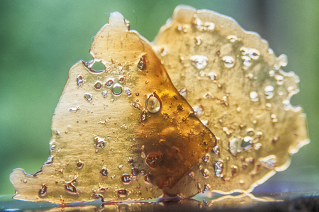 Pieces of cannabis oil concentrate aka shatter against green background