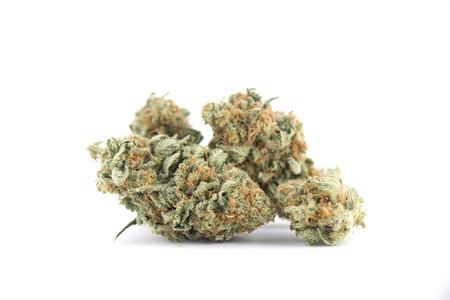 Détail des bourgeons de cannabis (souche de mouche de mangue) isolés sur blanc - concept de marijuana médicale