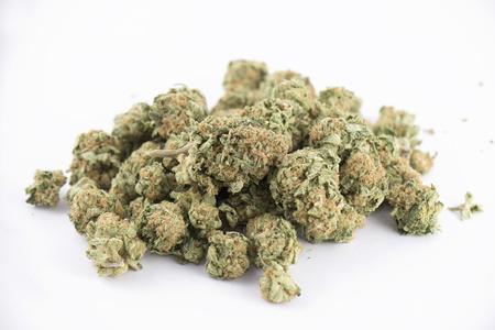 Detail of cannabis buds (mango puff strain) isolated on white - medical marijuana concept