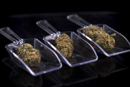 Assorted cannabis buds on scoopers isolated over black background - medical marijuana dispensary concept Stockfoto