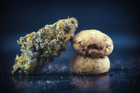 infused: Detail of single cannabis nug over infused chocolate chips cookies - medical marijuana edibles concept
