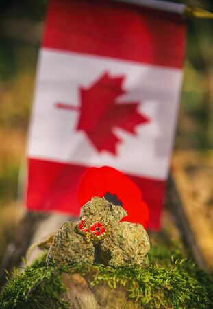 Detail of cannabis buds arranged in front of a Canadian flag - medical marijuana concept Banco de Imagens