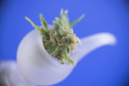 Macro detail of fresh cannabis flower on a bong bowl over blue background - medical marijuana concept