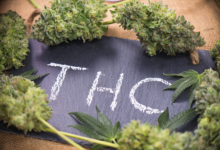 Medical marijuana background with cannabis leaves and buds sorrounding the word THC hand written on dark board Stock Photo