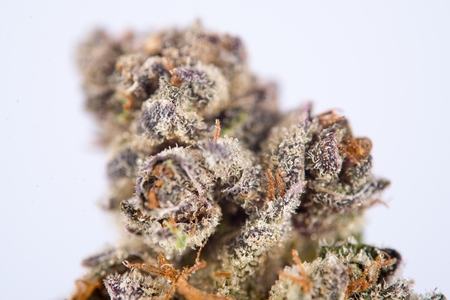 Detail of dried cannabis flower (space cookies strain) isolated over white background with visible trichomes
