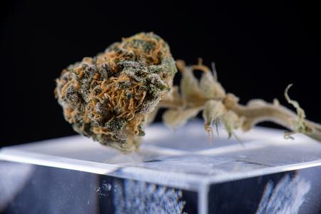 ambrosia: Macro detail of dried cannabis bud (ambrosia strain) over reflective glass surface on dark background - medical marijuana concept
