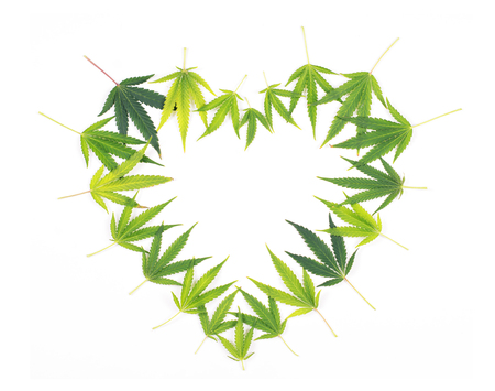 Heart shaped frame made from green cannabis leaves isolated on white - medical merijuana concept