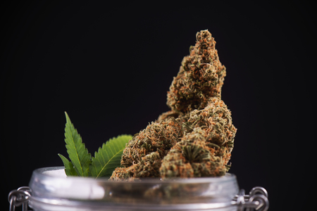 Macro detail of dried cannabis buds (green crack strain) on a glass jar isolated over black - medical marijuana dispensary concept