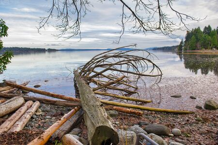 View of the estuaries with old logs in Ladysmith shoreline in Vancouver Island, Canada