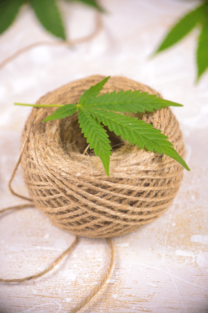 Macro detail of hemp fiber twine and cannabis leaf over white background - marijuana farming concept