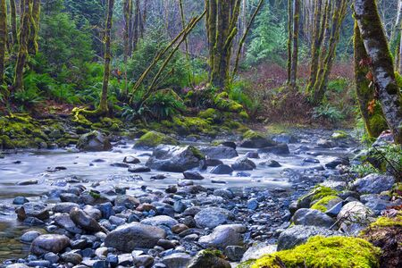 View of old growth rain forest in Holland Creek trail in Ladysmith, Vancouver Island, British Columbia, Canada