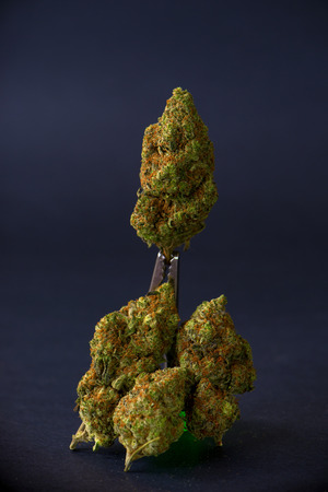 Cannabis buds (sour tangie strain) isolated on black background - Medical marijuana concept