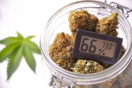 Detail of cannabis buds on clear glass jar with humidity gauge isolated on white - medical marijuana dispensary concept