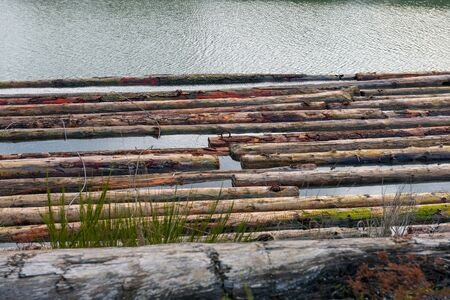 Detail of wood logs from the timber industry floating down a river in Vancouver Island, BC