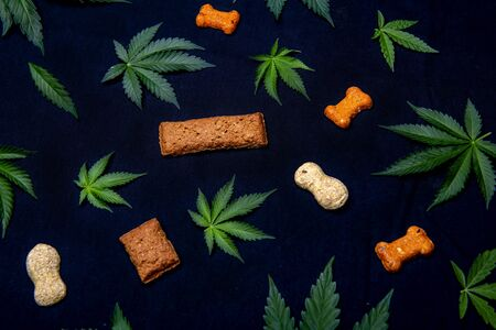 Dog treats and cannabis leaves isolated over black background - CBD and medical marijuana for pets concept 스톡 콘텐츠