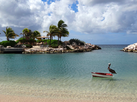 Pelican floating on a small boat in a caribbean beach