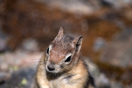 Isolated cute squirrel close up Banco de Imagens
