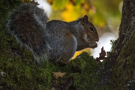 Squirrel eating a nut at a tree Imagens