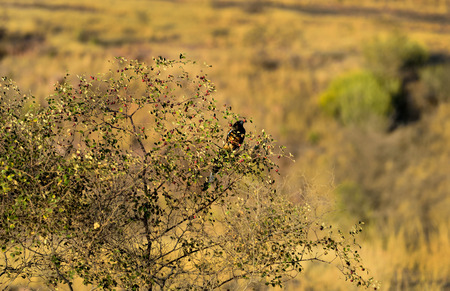 Glimpse of amazing Ranthambore forest