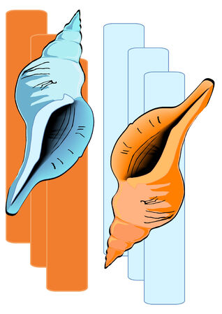 Vector Illustration of two sea shells in blue and brown tones