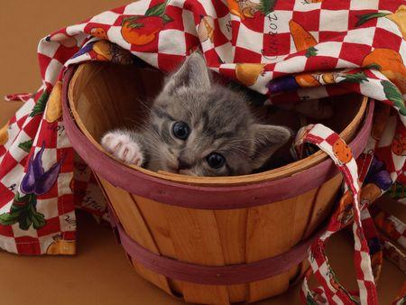 bushel: A small grey kitten playing hide and seek in a bushel basket.