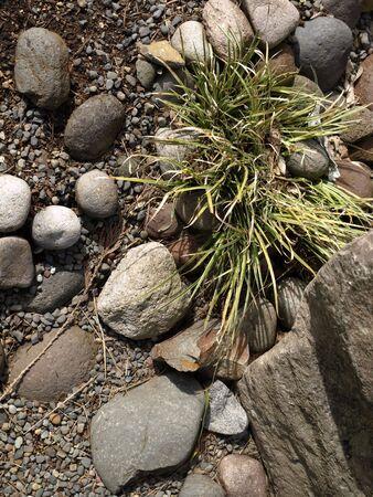 conservacion del agua: Agua del desierto paisajismo apoyo a la conservaci�n del agua.  Foto de archivo