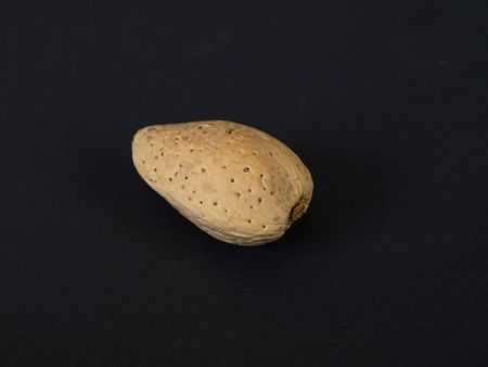 A solitary almond isolated against a black background. Stock Photo