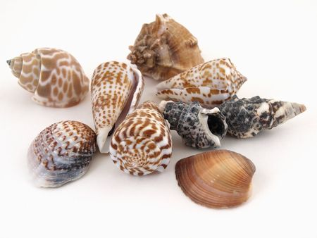 Various types of sea shells isolated on a white background. Stock Photo - 3236714
