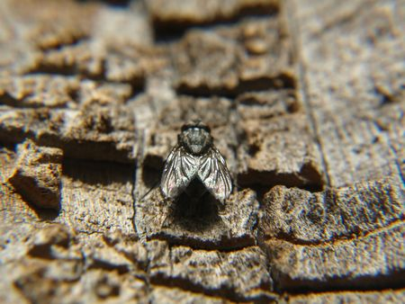 A fly sitting on the bark of a tree