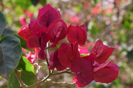 manjar: The delicacy of flowers in daylight Foto de archivo