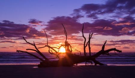 washup: Vecchio albero stata lavata su una spiaggia al tramonto. Archivio Fotografico
