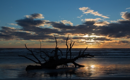 washup: Old tree been wash up on a beach at sunset. Stock Photo