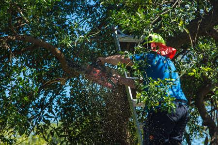 チェーンソーで木のいくつかの枝をトリミング、はしご男。