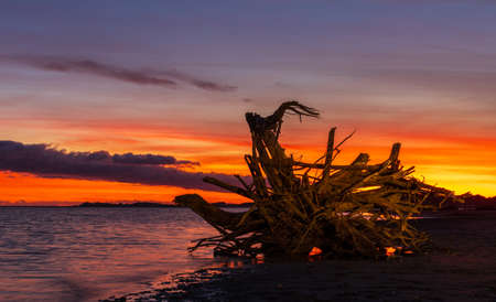 One old tree stump washup with a wonderful show of color form a sunset sky behind it.