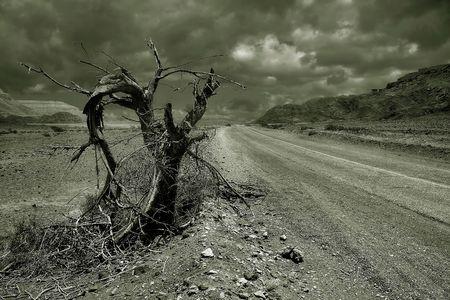 Desert road #2.