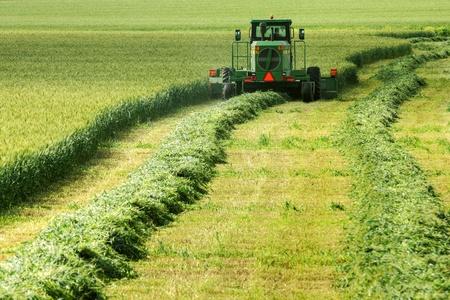 cosechadora: Harvester en campo rural con trigo durante la cosecha.