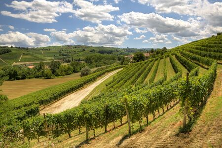 View on beautiful hills and vineyards of Langhe area in Piedmont, Italy.