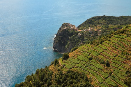 other side of: Aerial view on vineyards on the hills over Mediterranean Sea in Northern Italy.