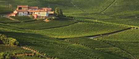 bodegas: Vista panorámica en casa rural entre viñedos en Piamonte, Italia.