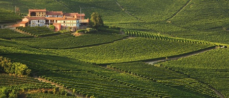 wineries: Vista panoramica sulla casa rurale tra vigneti in Piemonte, Italia.