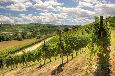 piedmont: View on beautiful hills and vineyards of Piedmont, Northern Italy.