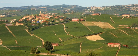 Panoramic view on vineyards and cultivated fields of Piedmont in northern Italy. photo