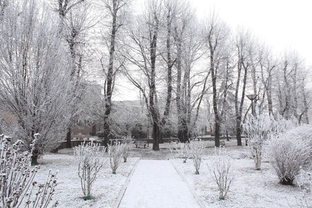 rime frost: Trees, bushes and alleys of small city park covered by rime frost in Alba, Italy.