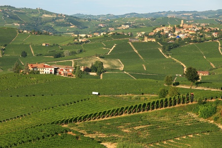 country side: View on vineyards on the hills in northern Italy. Stock Photo