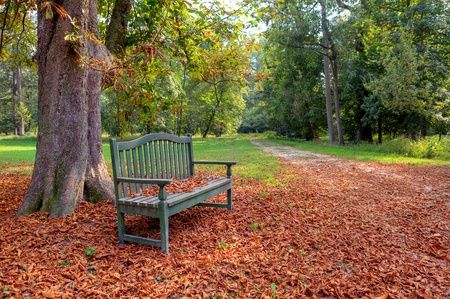 racconigi: Lone bench under the tree covered with yellow leafs in autumnal park of Racconigi in Northern Italy