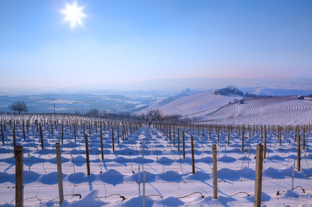 View on vineyards on snowy hills under clear blue sky with shining sun at winter in Piedmont, Northern Italy  Stock Photo
