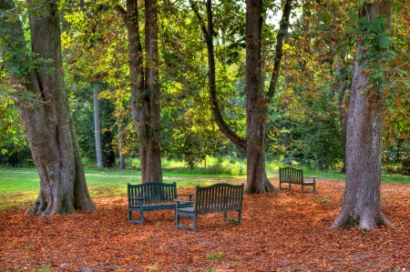 racconigi: Three benches under the trees and ground covered with yellow leafs in autumnal park of Racconigi in Northern Italy  Stock Photo