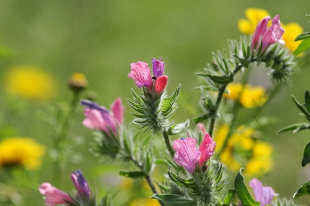Pink, purple and red spring wildflowers on a green background in the field Stock Photo - 17731724