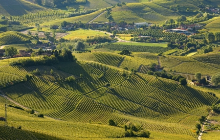 Green hills and vineyards of Langhe in early spring morning in Piedmont, Italy  view from above   photo