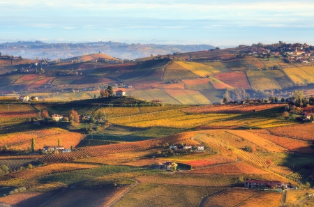 Early morning view of colorful autumnal vineyards on the hills of Piedmont, Northern Italy